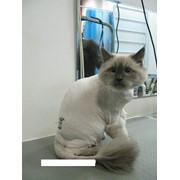 Нежные стрижки для кошек