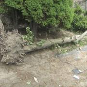 Раскорчёвка деревьев и кустарников фото