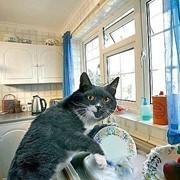 Мытье (мойка) окон фото