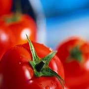 Свежие помидоры фото