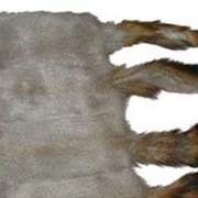 Мех белки фото