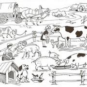 Кормосмесь для сельскохозяйственных животных и птиц фото