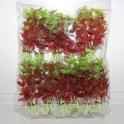 Набор водорослей 01-6 12 штук фото