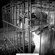 Питомник для собак. фото
