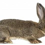 Комбикорм для взрослых кроликов фото