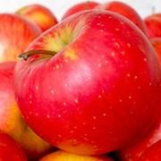 Яблоки Розовый рубин фото