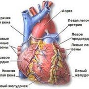 Услуги кардиолога фото