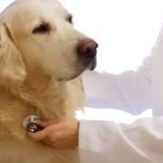 Консультации ветеринарные фотография