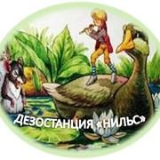 Уничтожение муравьев в Алматы фото