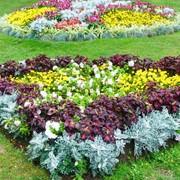 Уход за цветниками в Молдове фото