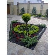 Ландшафтный дизайн. Питомник декоративных растений. Цветущие летники фото