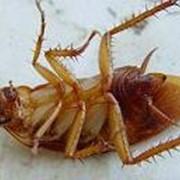 Уничтожение насекомых (дезинсекция) фото