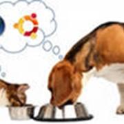 Продажа товаров для животных фото