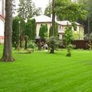 Посев травы фото
