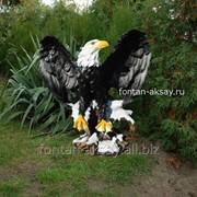 Орел на коряге фото