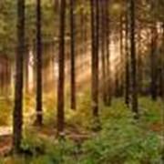 Охрана лесов от пожаров, вредителей, болезнейОхрана лесов от пожаров, вредителей, болезней фото