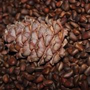 Продам кедровый орех, урожай 2016г. фото