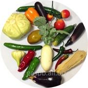 Муляжи овощей фото