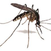 Обработка территории от комаров на весь сезон фото