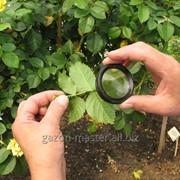 Услуга защиты садовых растений фото