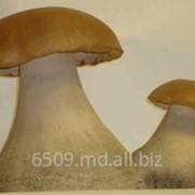 Белые грибы замороженные фото