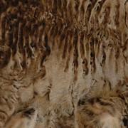 Натуральный мех каракульчи фото