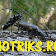 Уничтожение жука-короеда,усача,вредителей леса в Раменском районе,в Жуковском фото