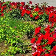 Устройство цветников и клумб №12 фото