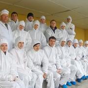 Reproducere, crestere porcilor Moldova фото
