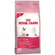 Корм для котов Royal Canin Kitten 10 кг фото