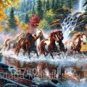 Картина стразами Табун прекрасных лошадей - 40х60см фото