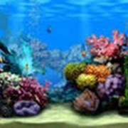 Аксессуары аквариумные в Алматы фото