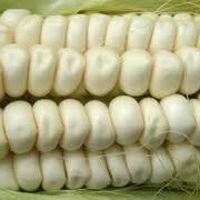 Кукуруза, кукурузу пищевая, кукуруза белая фото
