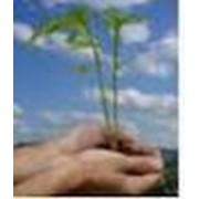 Исследования по экологии фото