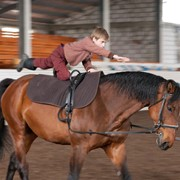 Лошади для спорта Gvenny Girl фото