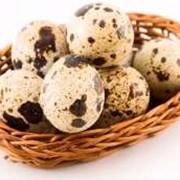 Яйцо перепелки белой-техаской купить, купить в Днепропетровске, купить по Украине фото