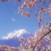 Услуги туристические Япония фото