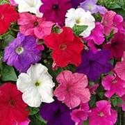 Рассада цветов. фото