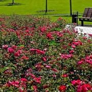Устройство цветников и клумб №7 фото