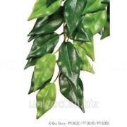 Террариумное растение Hagen Exo Terra FICUS (L) фото