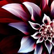 Услуги по свадебному цветочному оформлению живыми цветами