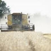 Рынки сельскохозяйственные фото