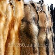 Шкуры лисы, енота фото