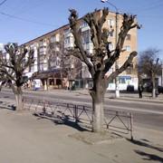 Обрезка деревьев весной фото