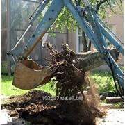 Выкорчевывание деревьев, услуги по выкорчевыванию деревьев, Борисполь, Киев фото