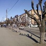 Удаление деревьев, спил деревьев (Киев, Киевская область) фото