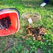 Приглашаем в поход за ягодами и грибами фотография