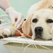 Гуманное усыпление и кремация домашних животных фотография
