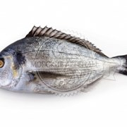Поступление охлажденной рыбы фотография