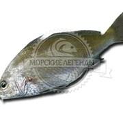 Обновлен раздел охлажденной рыбы фотография